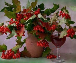 Вино из калины: простые рецепты приготовления домашнего вина