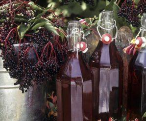 Настойка из черемухи: полезные свойства и способы приготовления напитка